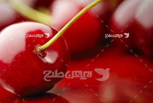عکس میوه البالو