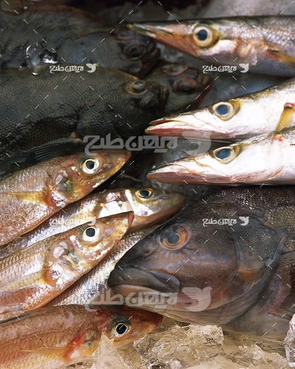 عکس ماهی،گوشت ماهی و میگو