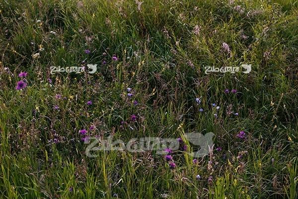 عکس منظره گل و گیاه