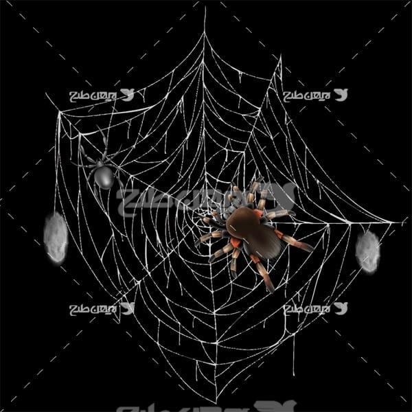 وکتور تار عنکبوت