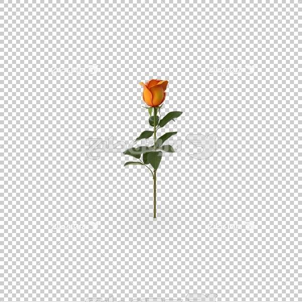 تصویر سه بعدی دوربری شاخه گل زرد