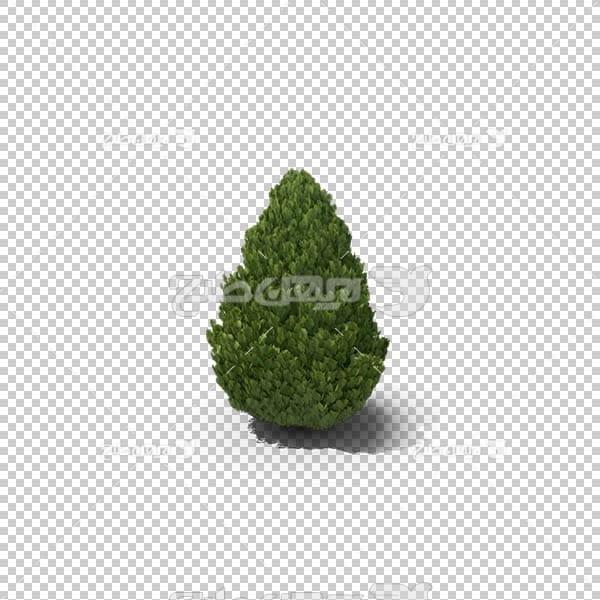 تصویر سه بعدی دوربری درخت سرو
