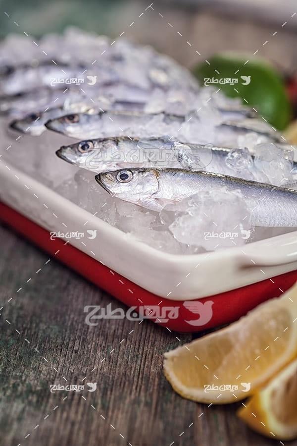 عکس ماهی و لیمو