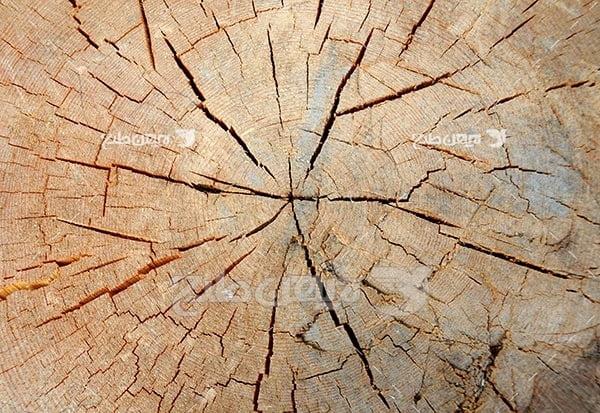 تصویر چوب و تنه درخت برش خورده
