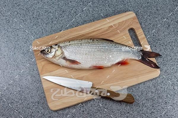 عکس ماهی