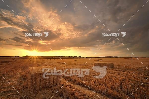 کشاورزی و غروب