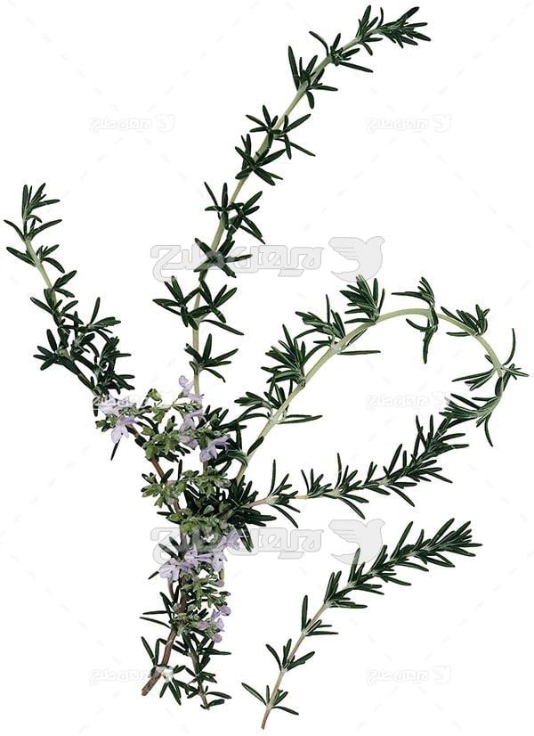 عکس گیاه