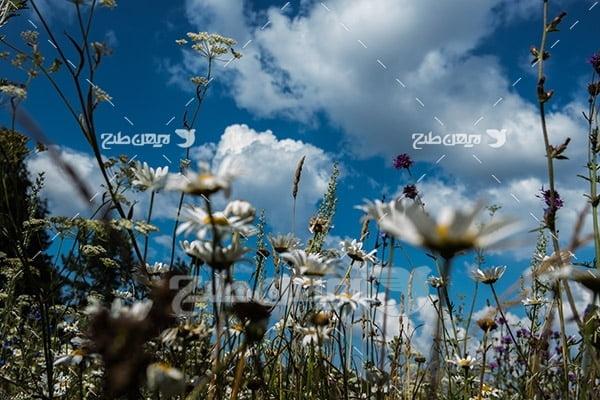 گل و گیاهان