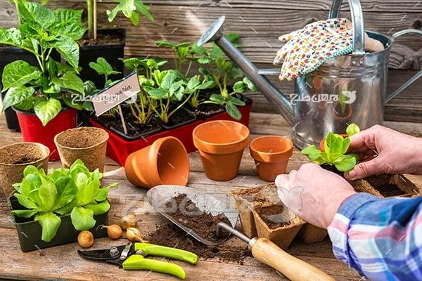 عکس کاشت گیاه در گلدان