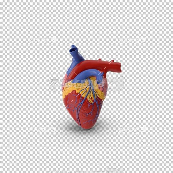 تصویر دوربری سه بعدی پزشکی قلب انسان