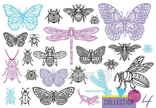 وکتور گرافیکی حشرات