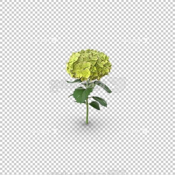 تصویر سه بعدی دوربری گل زرد