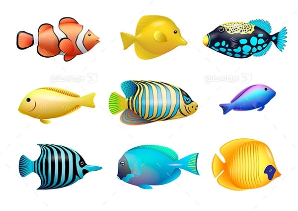 طرح گرافیکی وکتور ماهی