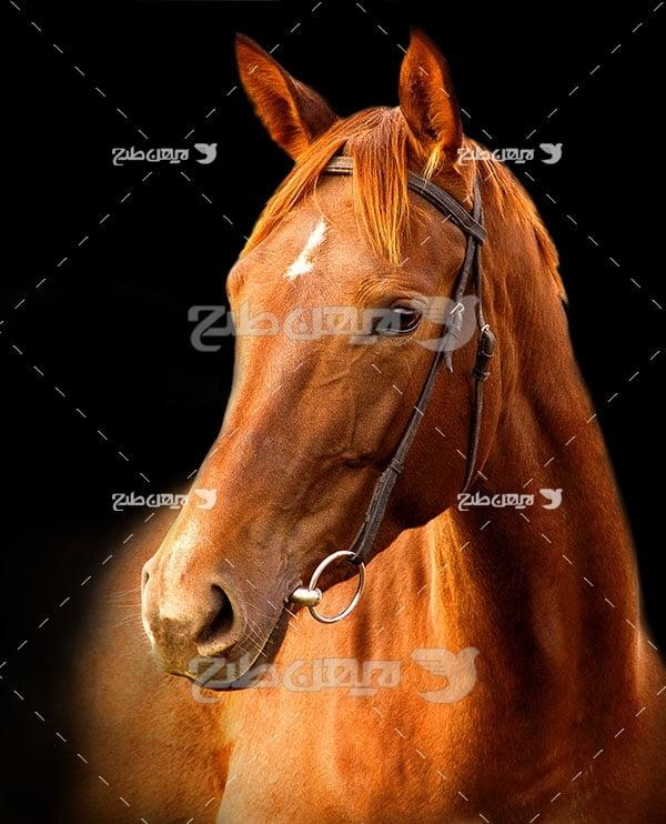 عکس اسب قهوه ای