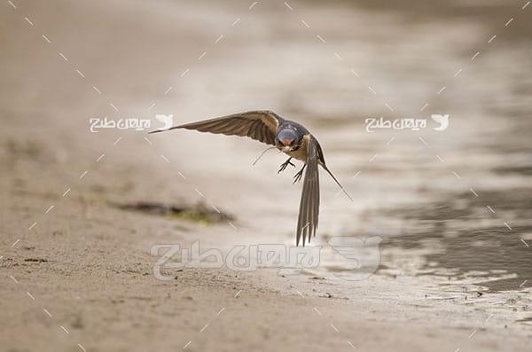 عکس پرنده