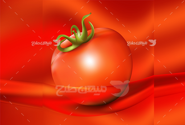 وکتور گوجه فرنگی