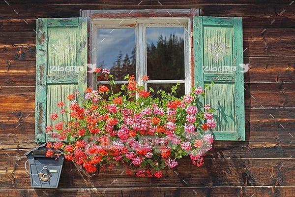 عکس پنجره چوبی و گل