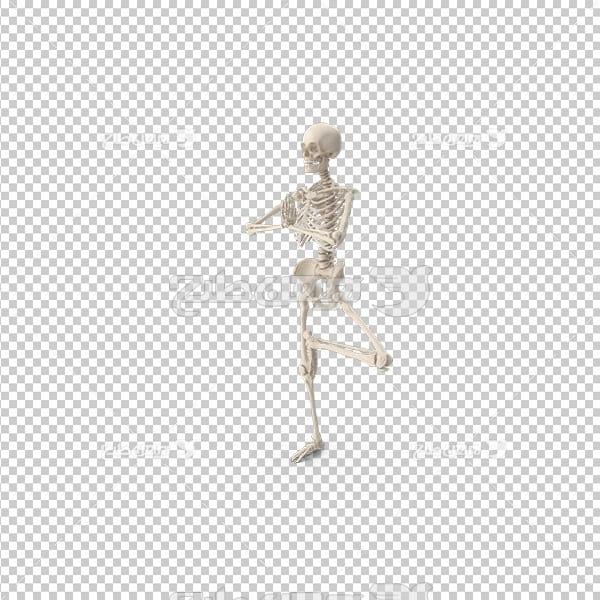 تصویر دوربری سه بعدی اسکلت انسان
