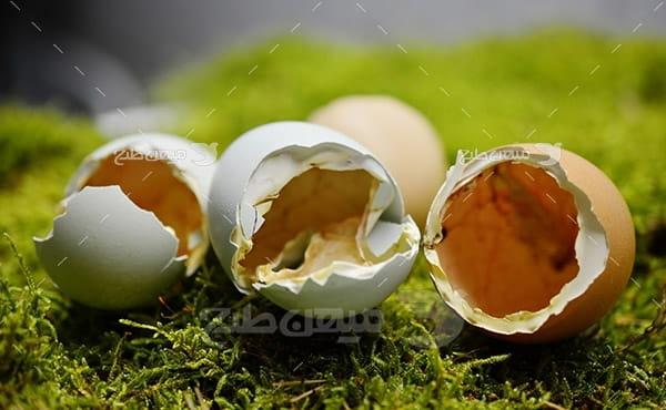 عکس تخم مرغ