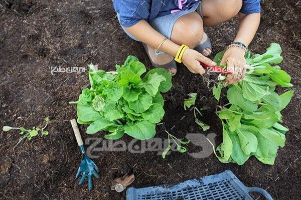 عکس چیدن سبزیجات
