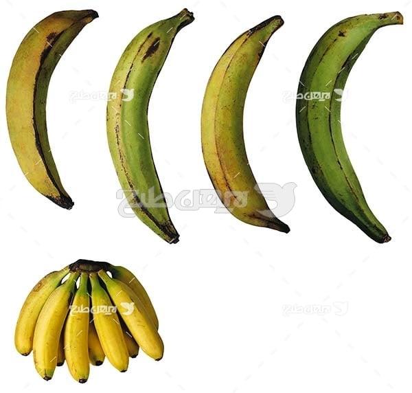 عکس میوه موز