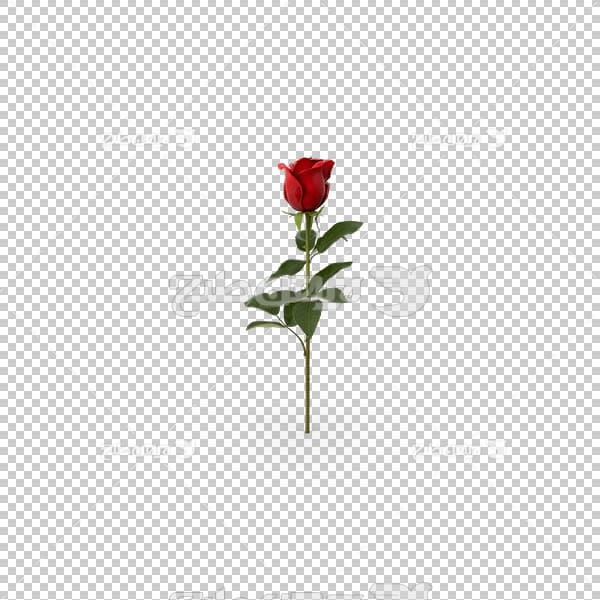 تصویر سه بعدی دوربری شاخه گل قرمز