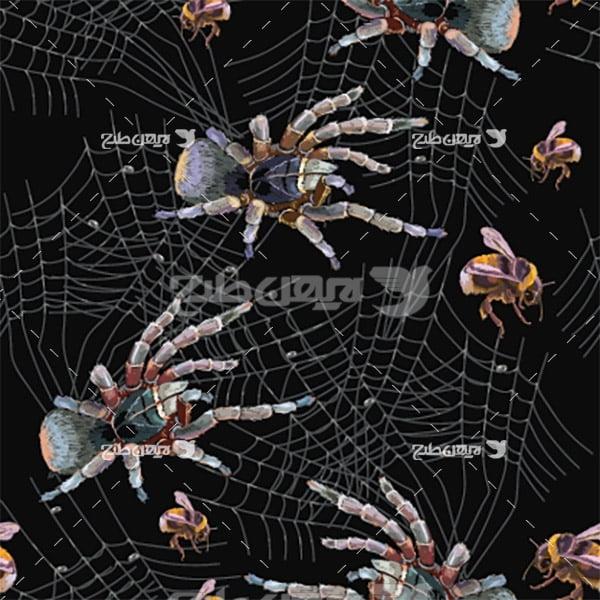 وکتور عنکبوت