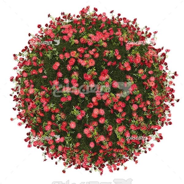 عکس کره زمین و گل ها