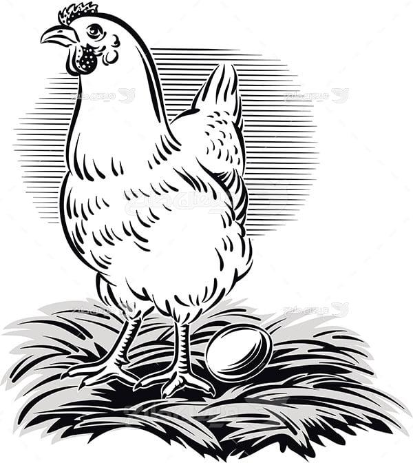 وکتور مرغ