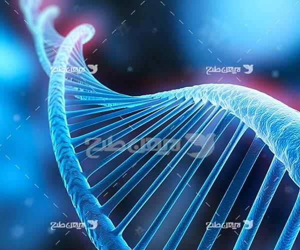 دی ان ای DNA