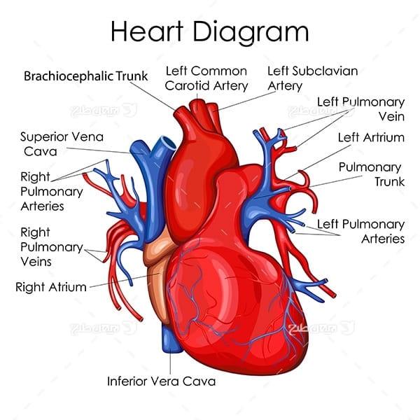 طرح وکتور با موضوع پزشکی - قلب