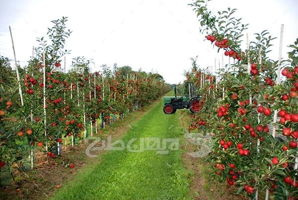 عکس باغ میوه