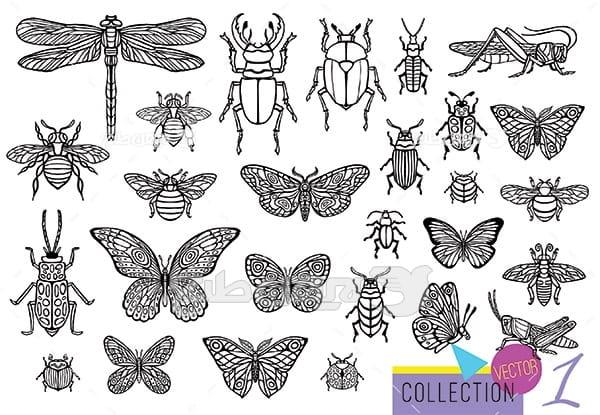 وکتور حشرات