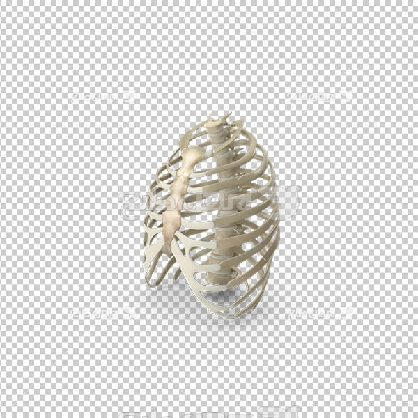 تصویر دوربری سه بعدی پزشکی استخوان ستون فقرات