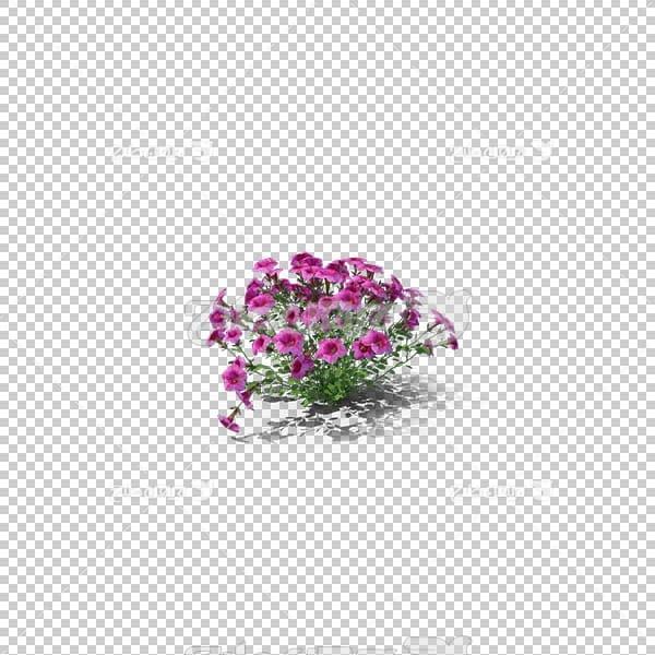 تصویر سه بعدی دوربری گل بنفش