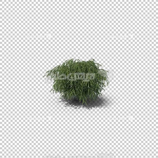 تصویر سه بعدی دوربری درختچه