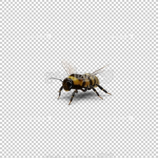 تصویر سه بعدی دوربری زنبور عسل