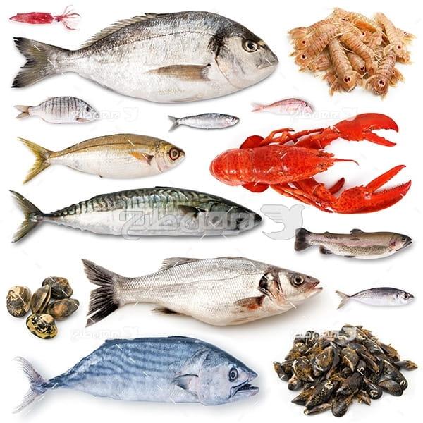 عکس ماهی،میگو,خرچنگ,صدف
