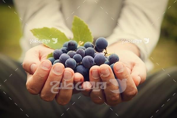 انگور سیاه و دست