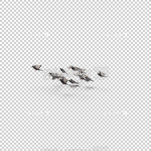 تصویر سه بعدی دوربری پرواز پرندگان