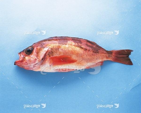 عکس ماهی،گوشت ماهی