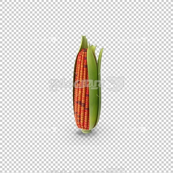 تصویر سه بعدی دوربری ذرت