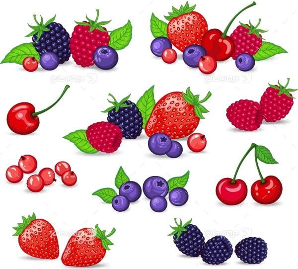طرح وکتور میوه