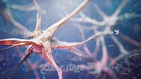 سلول های عصبی