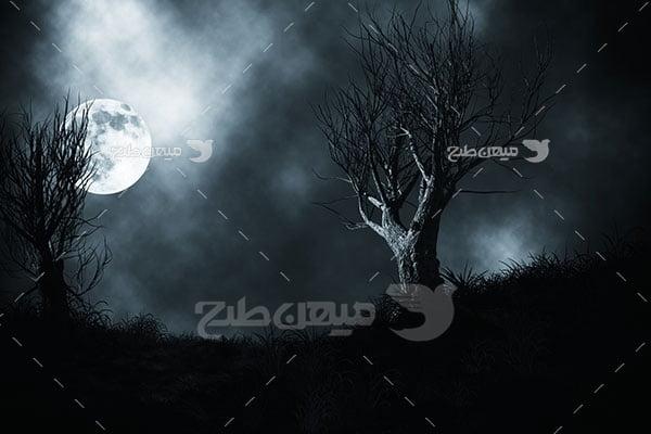 عکس ماه و درختان