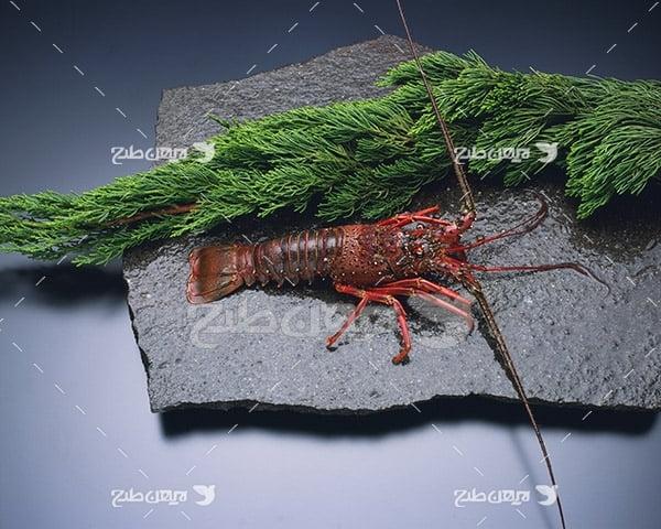 عکس خرچنگ