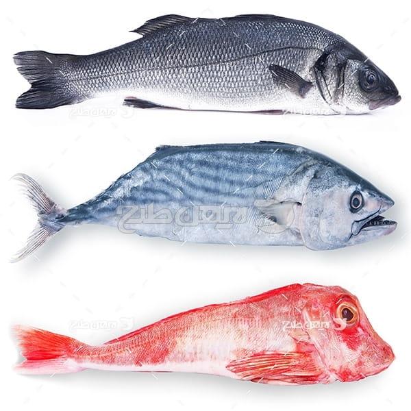 عکس ماهی،گوشت ماهی, ماهی ها