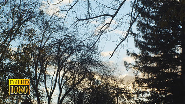 فوتیج ویدیویی تایم لپس درخت